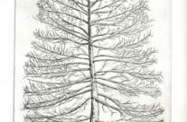 Magpie tree